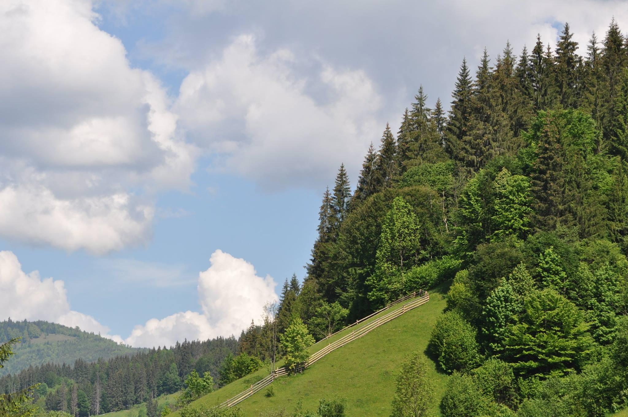 На Рахівщині провели «лісовий» прес-тур. ФОТО