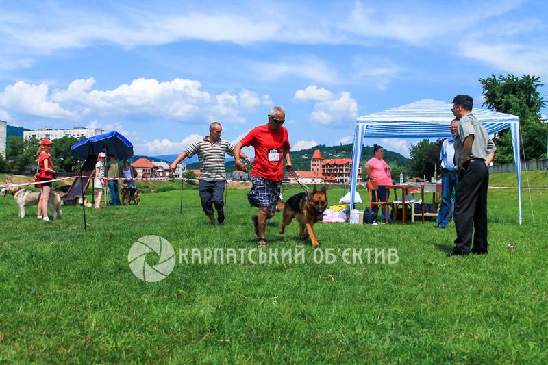 У місті над Латорицею пройшла регіональна виставка собак «Кубок Мукачева – 2016»