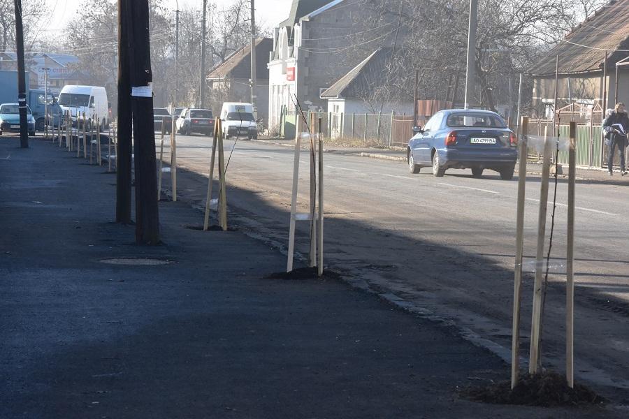 Іршавські сакурові алеї поповнили молодими саджанцями