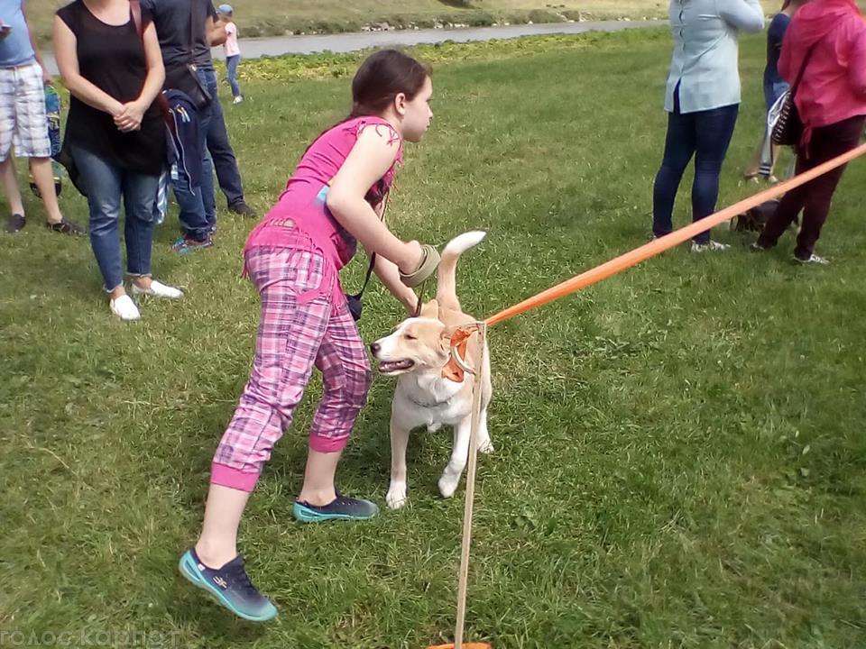 У Мукачеві стартував традиційний Парад собак 2018. ФОТО