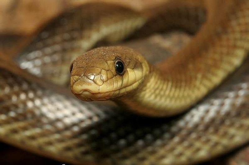 Чи варто боятися закарпатських змій?