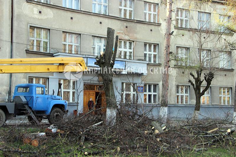 В Ужгороді проходить маніакальна зрізка дерев