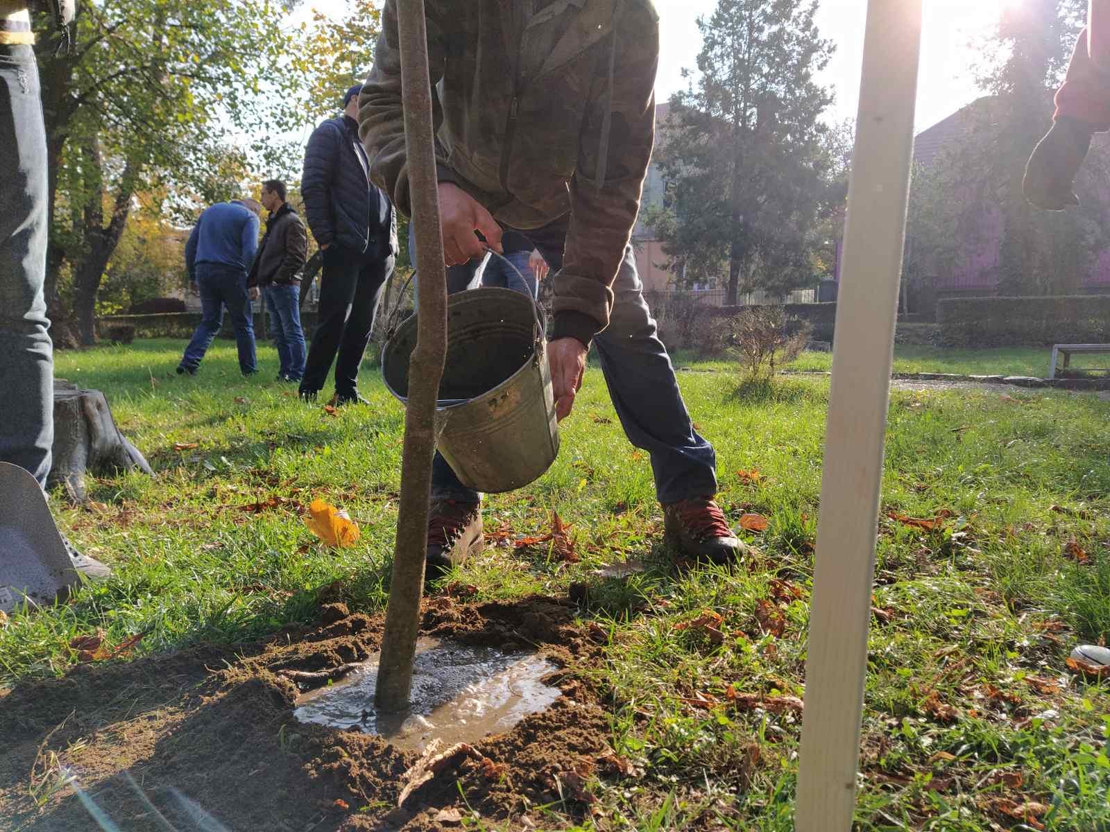 Озеленили: у Мукачеві висадили три сотні дерев